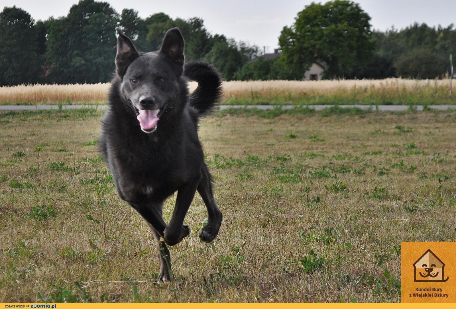 Blacky, energiczny psiak szuka dobrego domu!