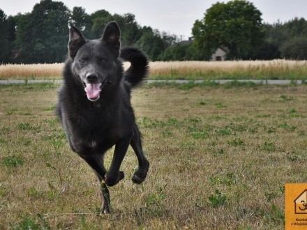 Blacky  energiczny psiak szuka dobrego domu!