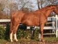 Szukam konia do dzierżawy z przeniesieniem