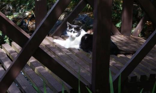 Pączek  super koci indywidualista szuka domu!   Koty pospolite cała Polska