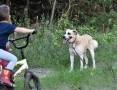 Bandi, cudowny psiak szuka wymarzonego domu!
