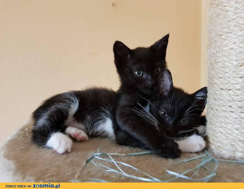 Kociaki z gałęzi