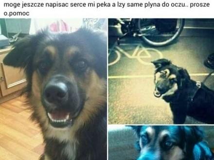 Scrappy pies pacyfista   opolskie Opole