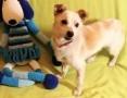 'RAMBO - wrażliwy, malutki, 6 kg psiak; szuka domu,  łódzkie Łódź