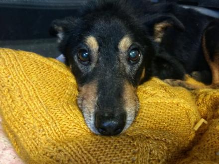 Gonzales, kochana psinka szuka kochającego domu!