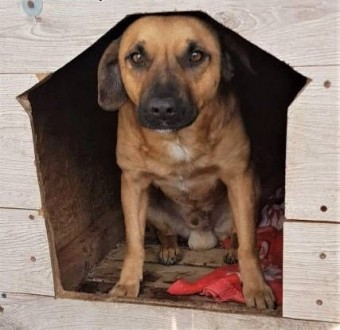 ADRIAN - przerażony  wrażliwy psiak w schronisku  prosi o DOM!   łódzkie Łódź