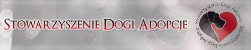 Wandi-dog niemiecki do adopcji