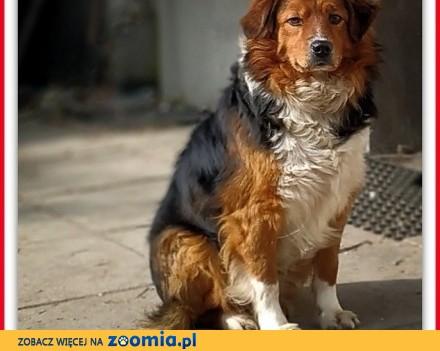 Do domu z ogrodem średni 18 kg przyjazny świetny psiak DANY_Adopcja_