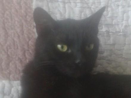 Zaginął czarny kot Filip