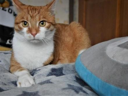 Garfield z Fundacji Miasto Kotów   łódzkie Piotrków Trybunalski