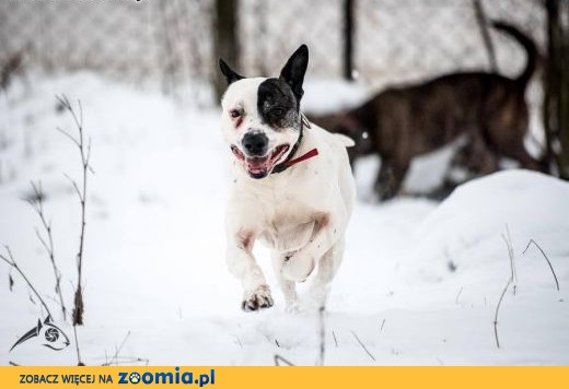 Bratek to pies, co wesoły jest;)!,  świętokrzyskie Kielce