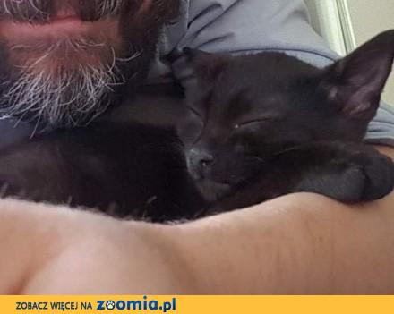 Zaginął czarny kot