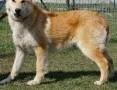 'GUCIO - ok. 10miesięczny średniej wielkości psiak szuka dobrego domu!,  mazowieckie Nasielsk