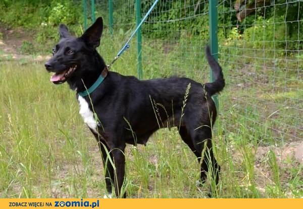 Niunia - śliczna, czarna znajdka :)