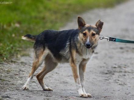 Kojot  wesoły psi dzieciak szuka domu!