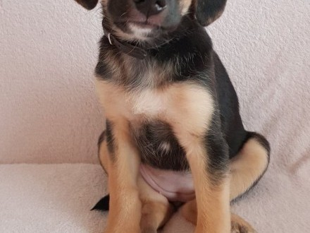 BEKI - cudowna, urocza szczeniaczka szuka domu!,  mazowieckie Warszawa