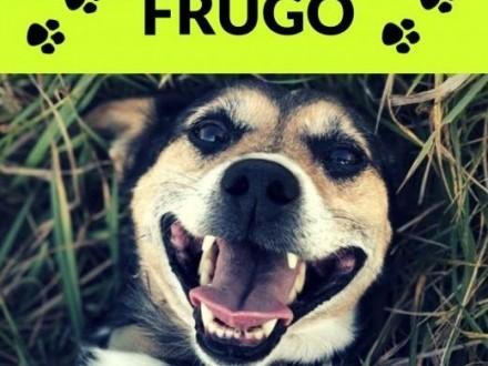 Frugo-zakochany w człowieku po uszy towarzyski młody aktywny   małopolskie Kraków