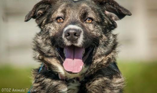 OTOZ Animals - Polar - uroczy psiak  cudowny przyjaciel na dobre i złe   pomorskie Tczew