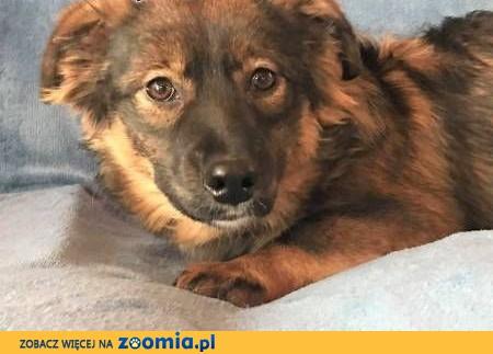 MISIA – 9-miesięczna szczeniaczka wyrzucona na śmietnik; szuka domu,  wielkopolskie Poznań