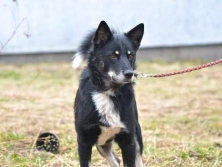 Gucio wesoły przyjazny pies   podkarpackie Tarnobrzeg