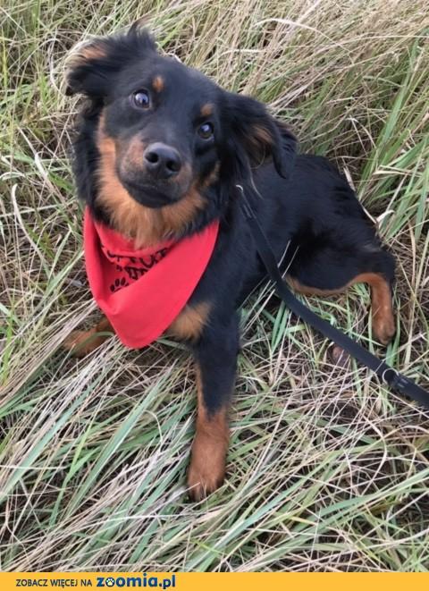 Kefir, młody psiak szuka kochającego domu!