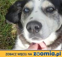 ok.5letni uroczy Pirat o niezwykłych oczach-szuka domu!,  mazowieckie Warszawa