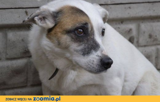 Tola-14kg,delikatna i bardzo łagodna, urocza sunia PILNIE szuka domu,  mazowieckie Warszawa