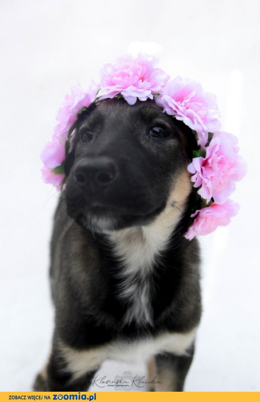 4 miesięczna Kiki, sympatyczna sunia do pokochania!