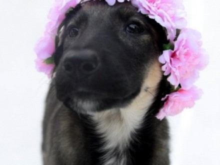 4 miesięczna Kiki  sympatyczna sunia do pokochania!