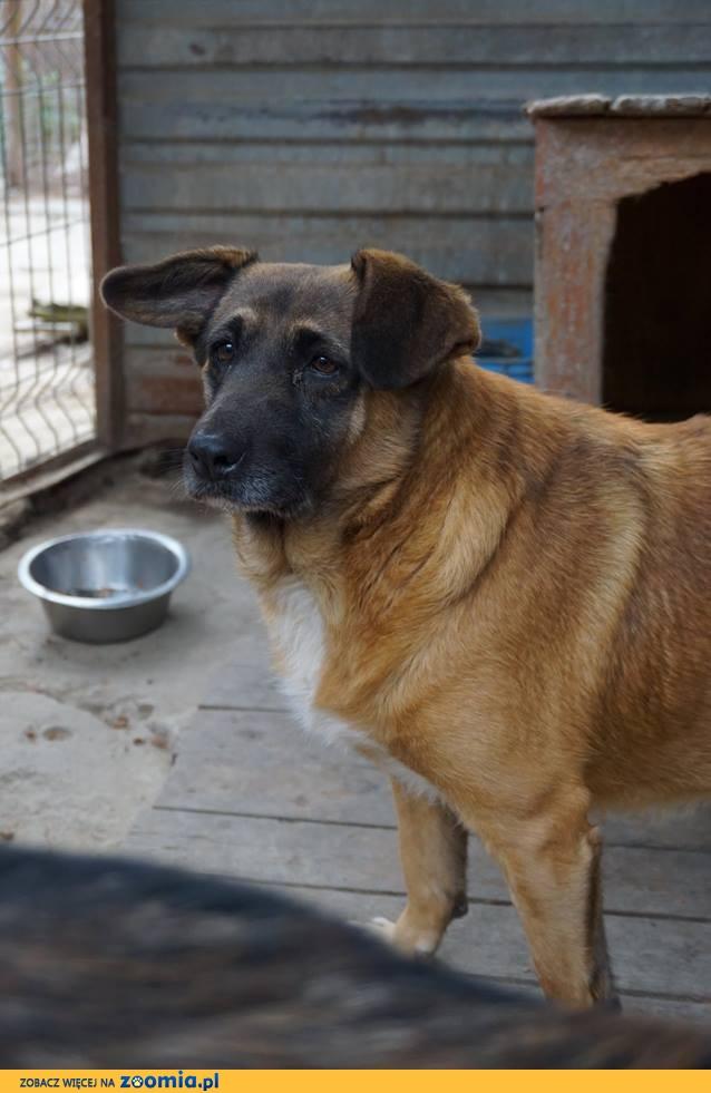 Beza - najsmutniejszy pies w schronisku - adopcja