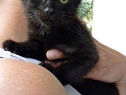 Kociak Elena śliczna mała koteczka szuka kochającego domu!    wielkopolskie Poznań