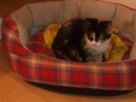 Mała kotka Emma szuka domu