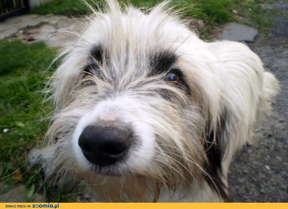 Roczny Biały Wafel :) Adoptuj go i pokochaj ! :))