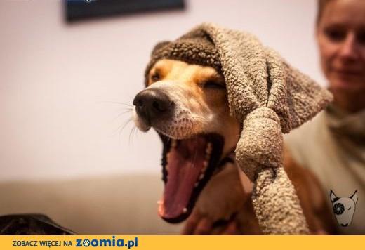 TOFFIK - kto pokocha psa, co tyle optymizmu ma ? :),  dolnośląskie Wrocław