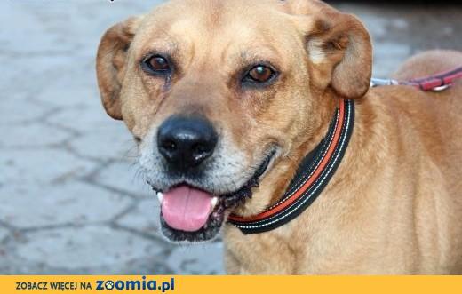 Przyjacielski psiak Kuba szuka domu!,  dolnośląskie Wrocław