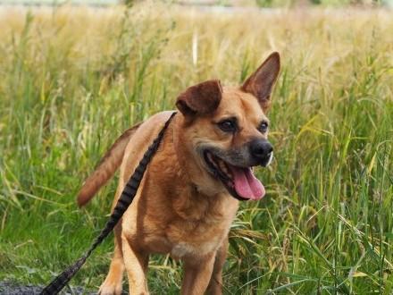 Rumcajs-średniej wielkości  bezproblemowy pies!