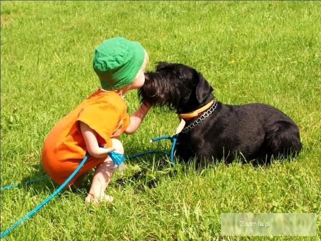 Szkolenie psów rasowych i nierasowych