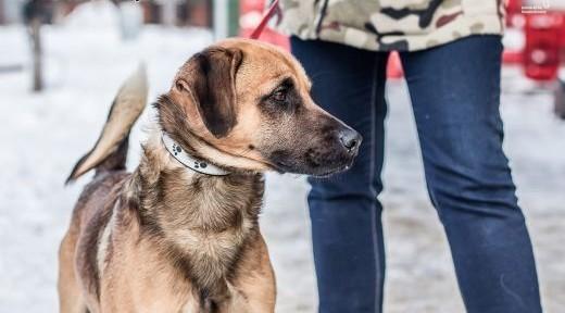 Perro - piękny psiak czeka na swój dom!    śląskie Ruda Śląska