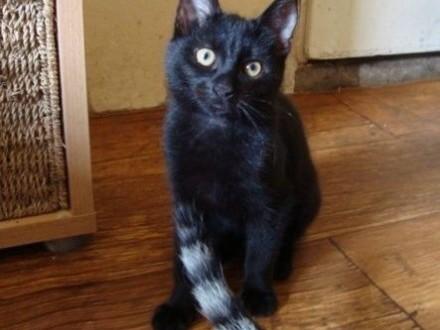 4-m-sięczna kotka do adopcji   lubelskie Lublin