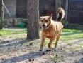Kaszmir, cudowny psiak szuka domu!