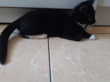 Kociak cudna Tosia szuka kochającej rodziny!   wielkopolskie Poznań
