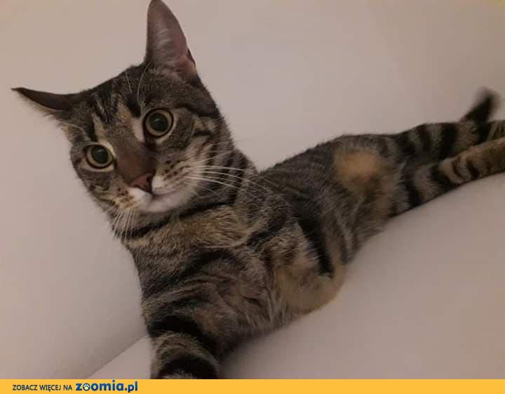 Łapka, przyjazna koteczka, wręcz idealna! Pokochaj ją!