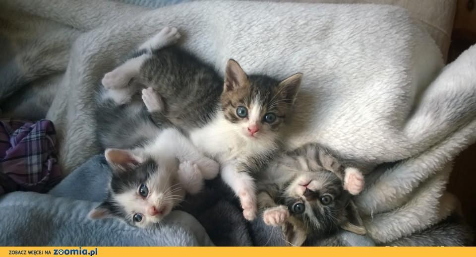 Cudowne kocie dziewczynki Bibi i Dixi szukają kochających domków