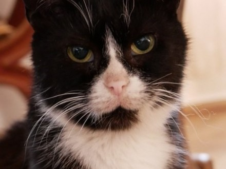 Roczna Mamba, cudna kotka szuka domu!