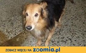 Znaleziono psa,  małopolskie Kraków