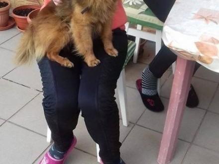 Pinki  mały  starszy psiak lubiący koty   Kundelki cała Polska