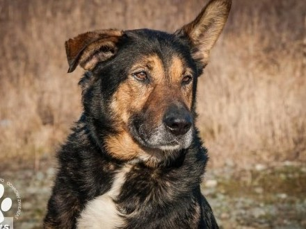 OTOZ Animals - Gonzo - duży senior o wielkim sercu szuka nowego domu!