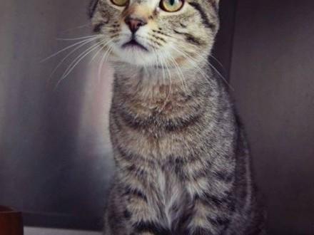śliczny kotek białaczkowy czeka na domek   łódzkie Konstantynów Łódzki