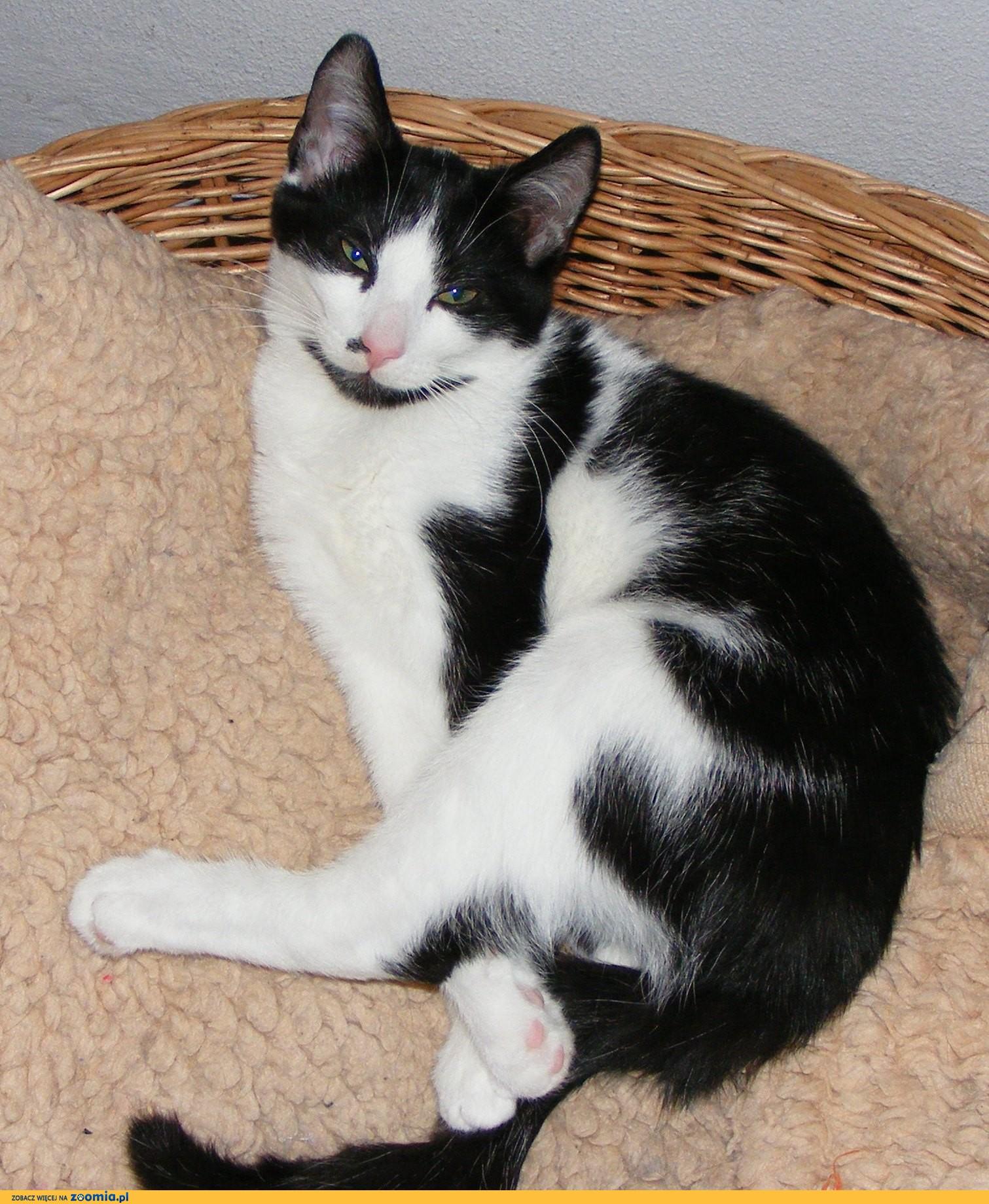 Ogłoszenia Oddam Psa Oddam Kota Pies I Kot Szuka Kochających