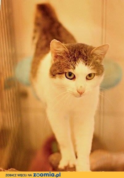 Armin - kotek ze schroniska czeka na swój wymarzony dom...